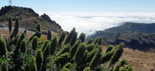 madeira hike routes